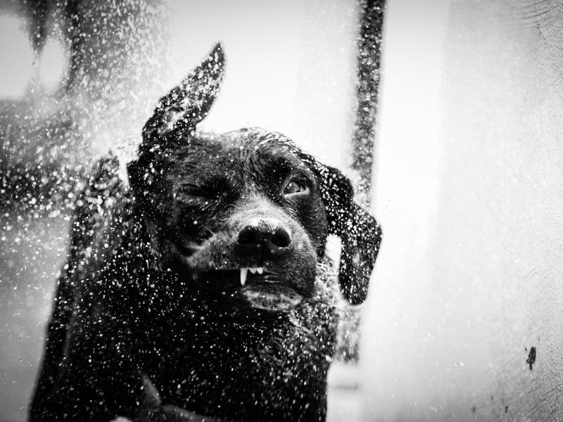 Troy's Shower
