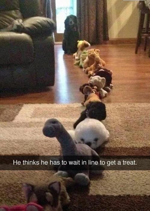 Dog waiting in line for a treat
