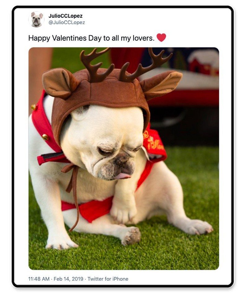 Frenchie in costume