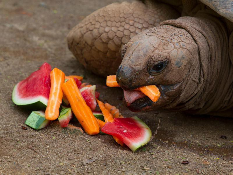 Turtle eating at Sao Paulo Zoo