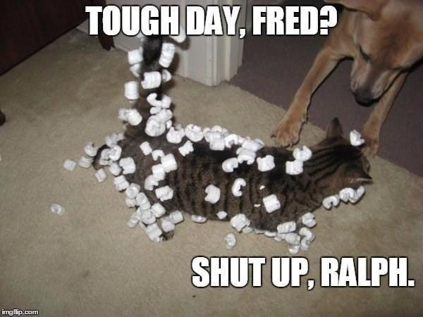 Cat playing with styrofoam peanuts