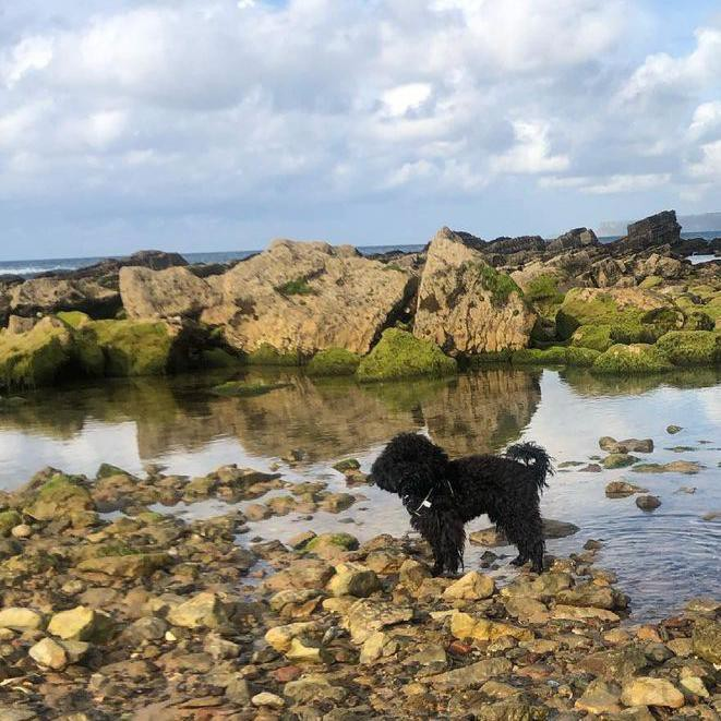 Black poodle on a rocky beach