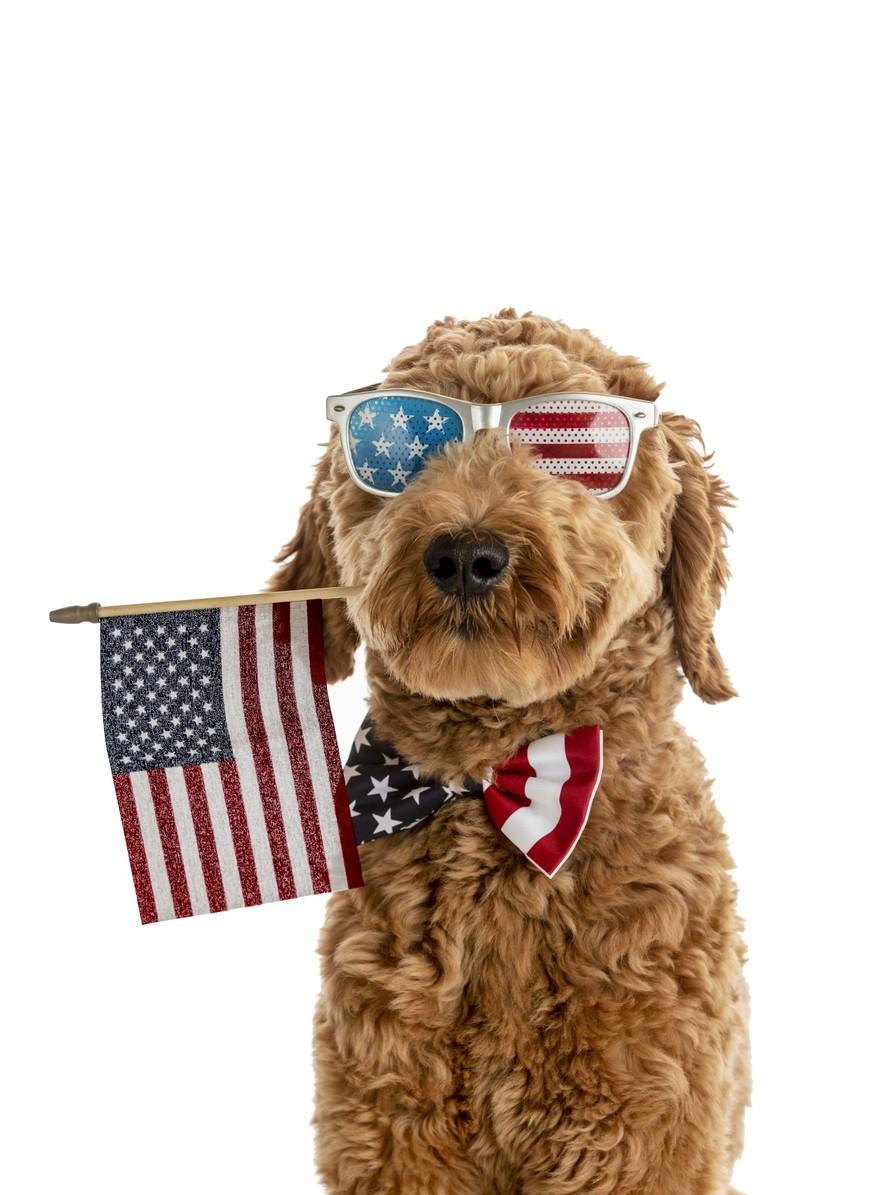 American flag dog