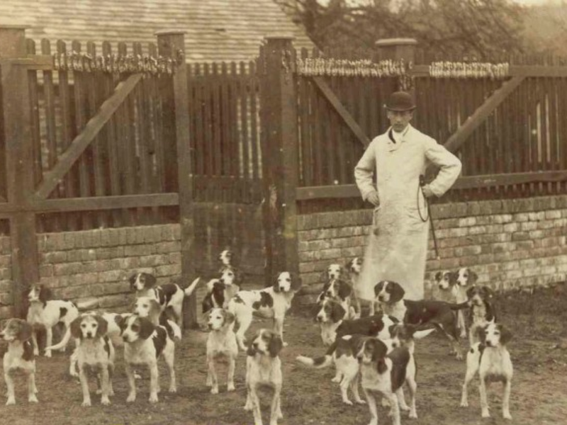 beagle origin