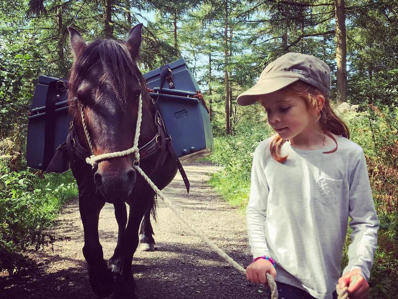 Little girl and Fell Pony