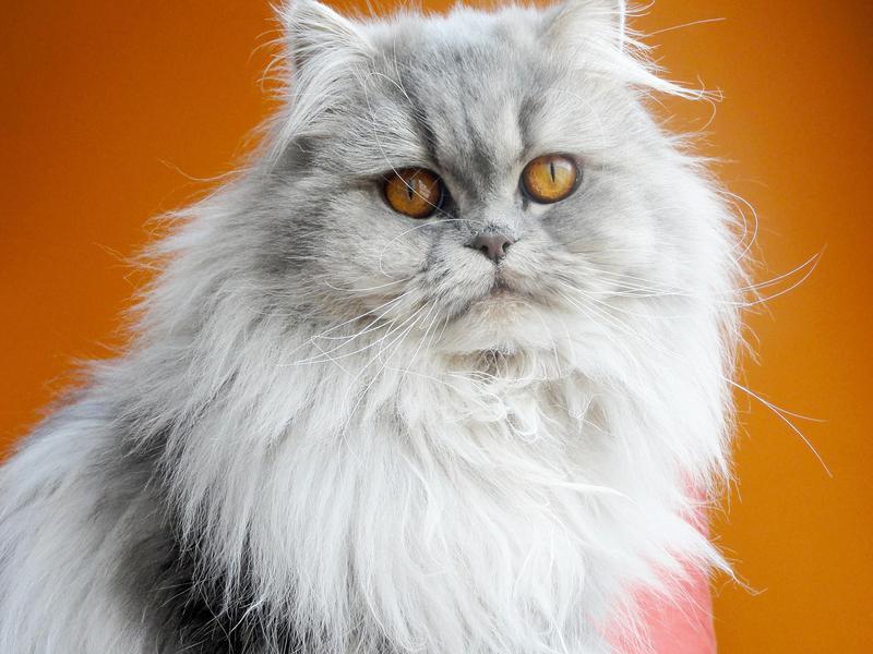 'Miso' Boy Cat Name