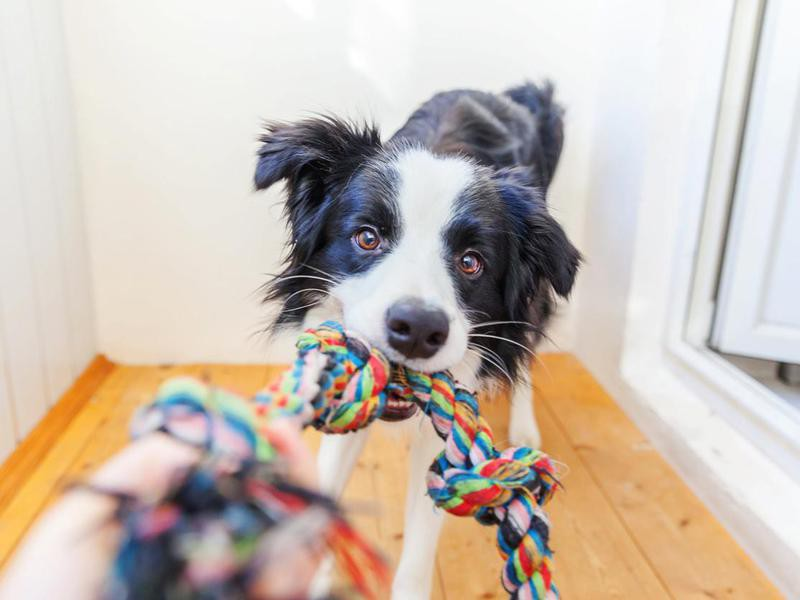 Put a Treat or Toy on a Rope