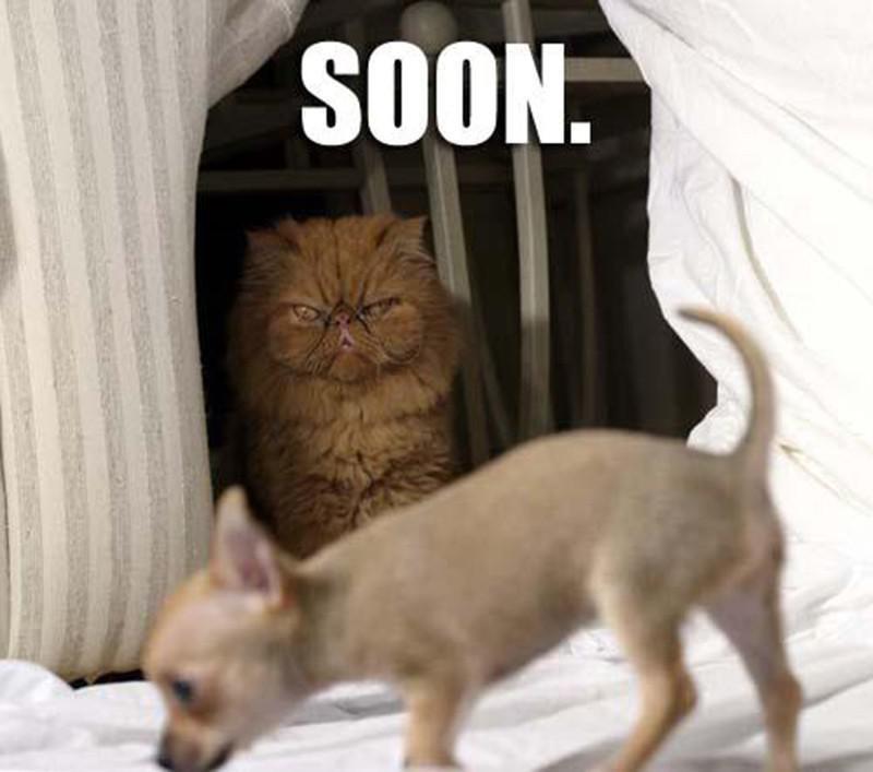 Cat plotting