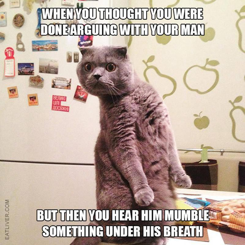 Cat relationship issues