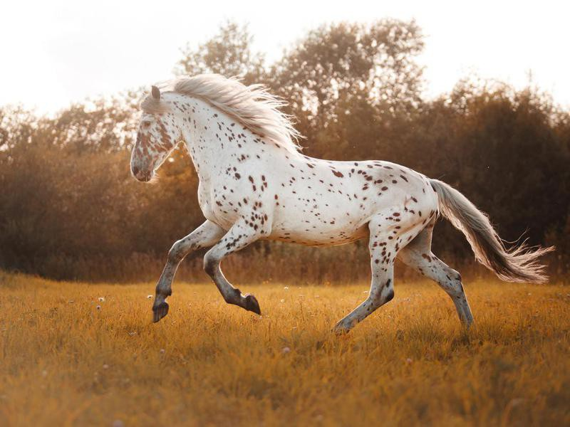 White spotted horse