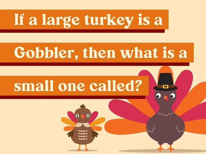 If a large turkey is a Gobbler, then what is a small one called?