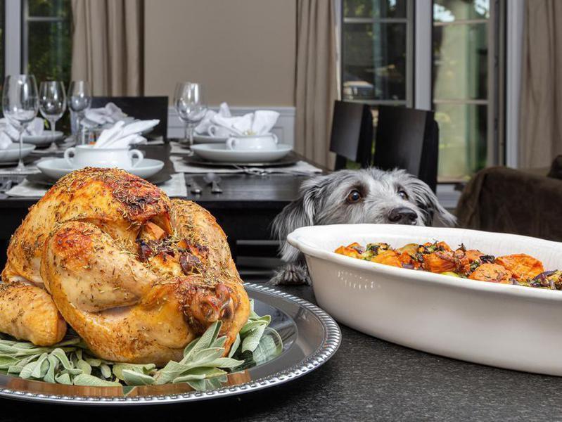 dog thanksgiving