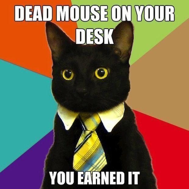Cat gets a reward of a dead mouse