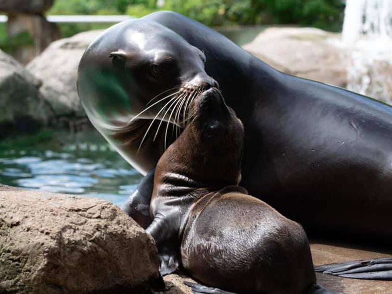 PPG Aquarium Seals