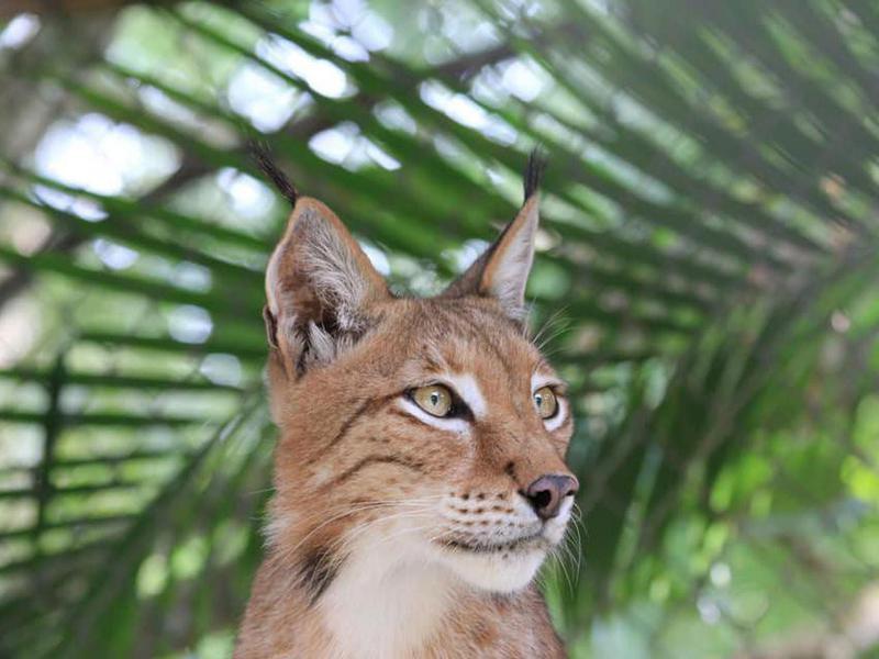 McCarthys Wildlife Sanctuary