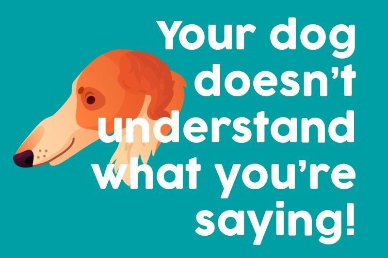 Your dog doesn't understand what you're saying!