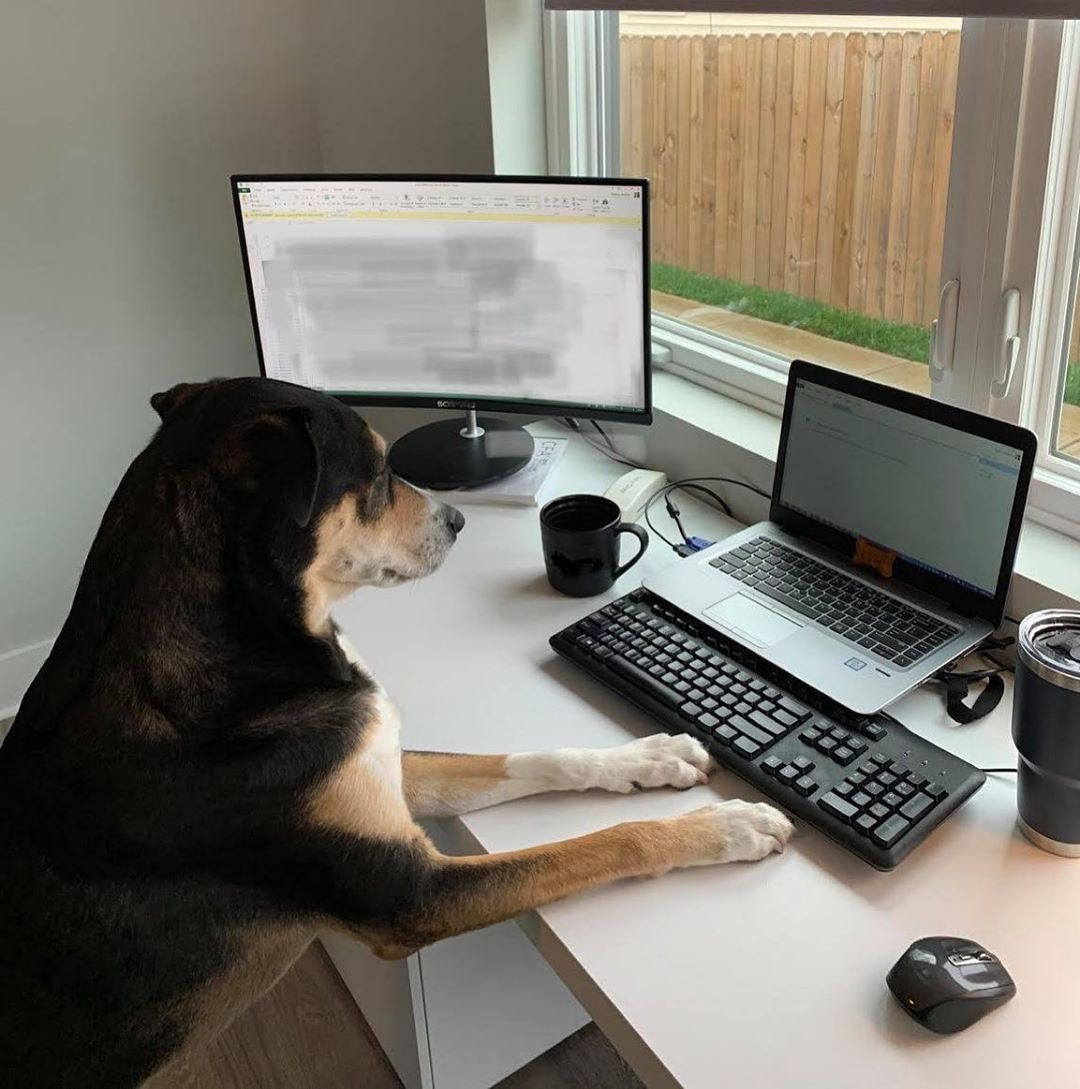 Dog working on a computer at home