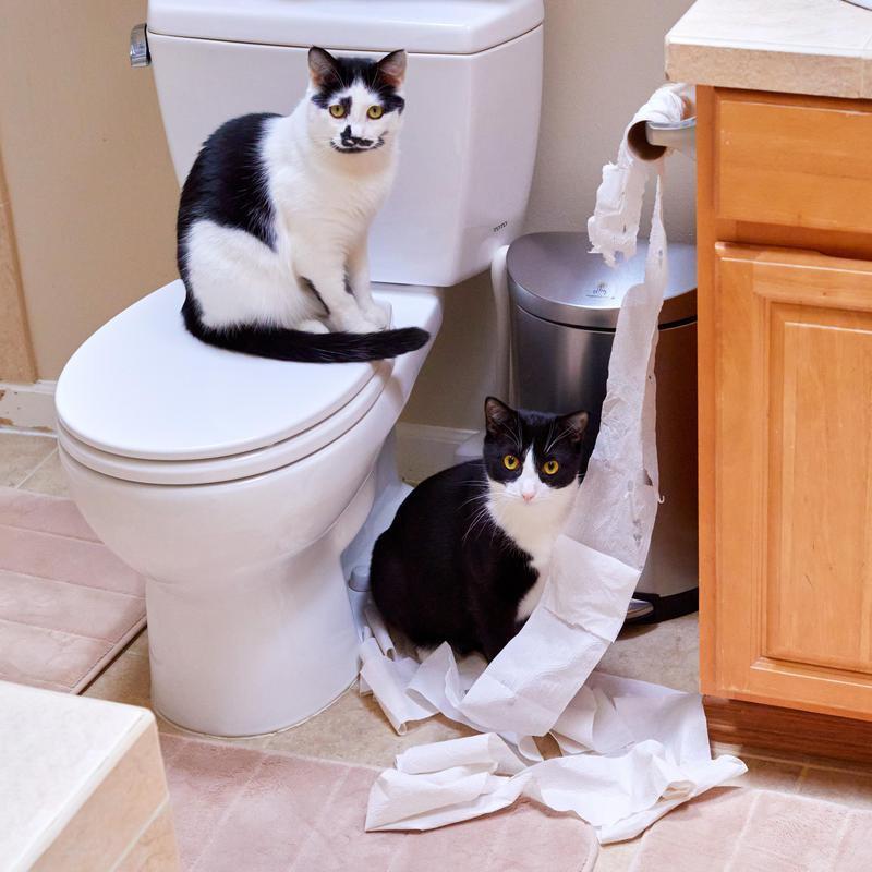 cats in bathroom