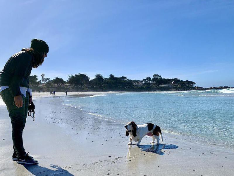 A basset hound in the water at Carmel Beach