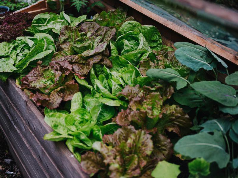 Start a Vegetable Patch