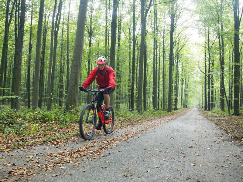 Hallerbos Forest