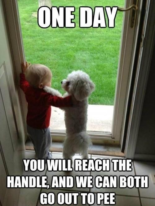 Young kid and dog bonding
