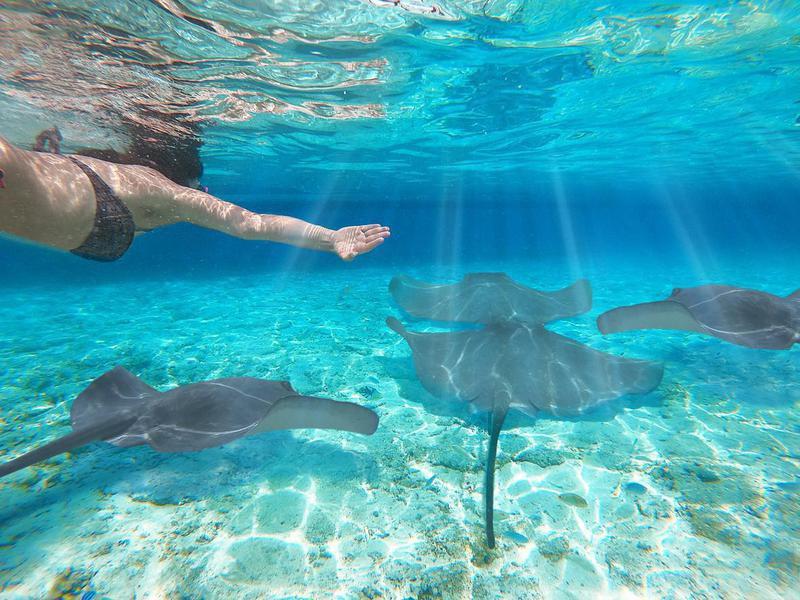 Girl snorkeling with manta ray