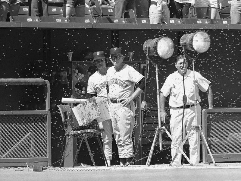 Bill Rigney looks out from dugout