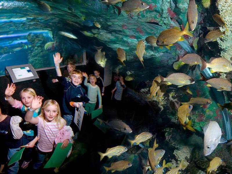 Reiman Aquarium field trip