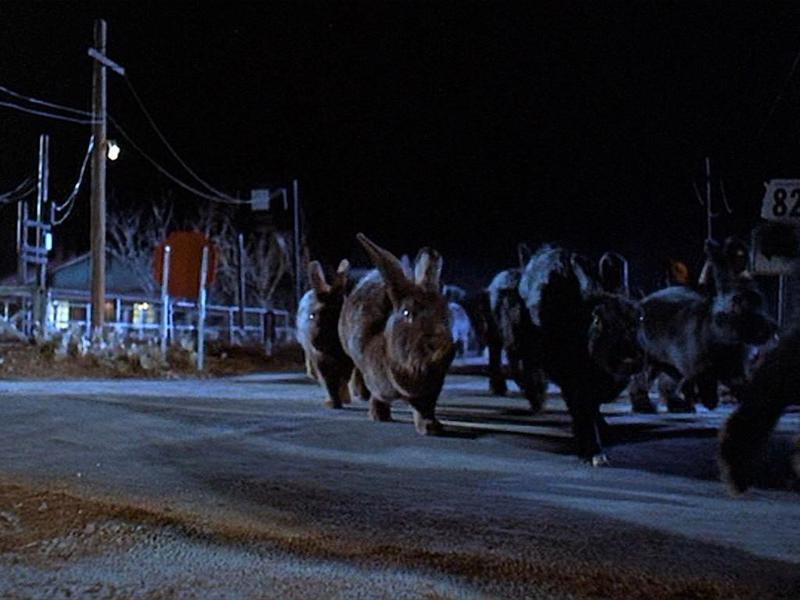 Terrifying rabbits