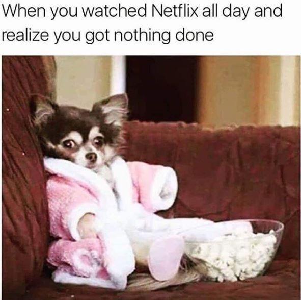 Dog binge-watching Netflix