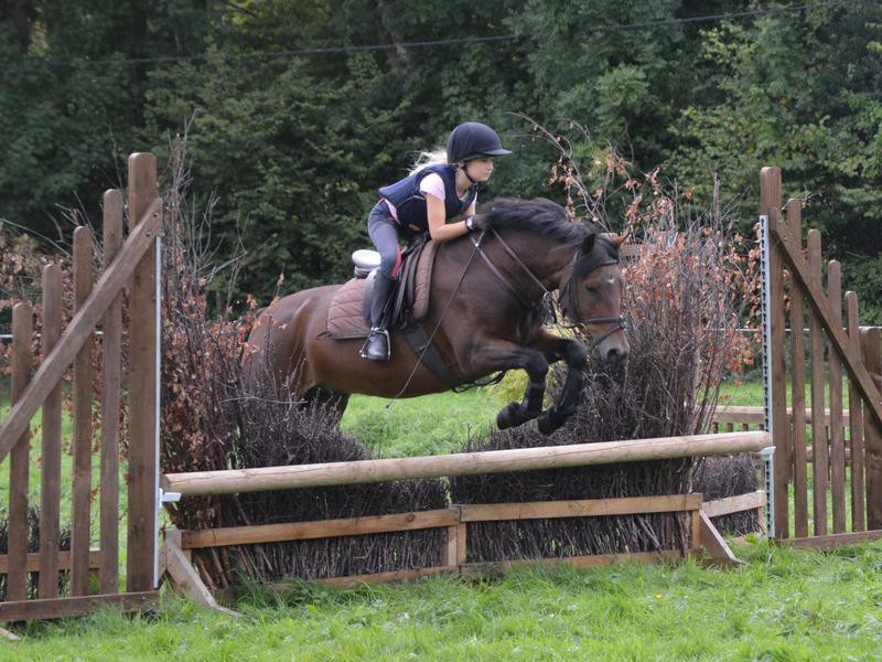 New Forest Pony and rider