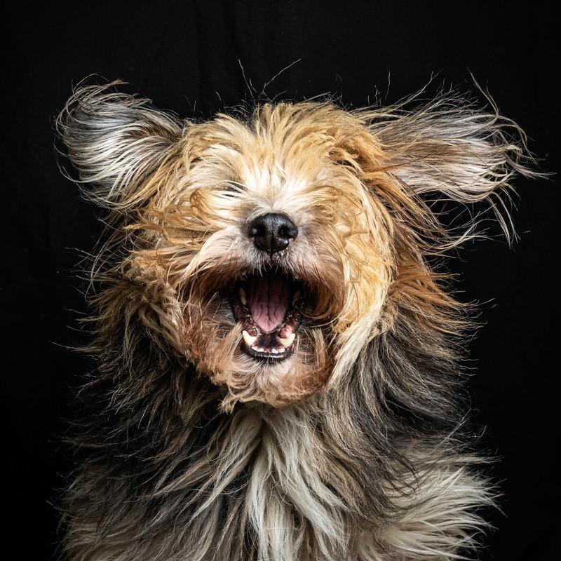 windy dog hair