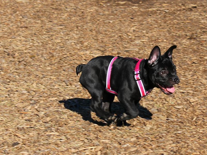 Shawnee Mission Park Dog Off-Leash Area