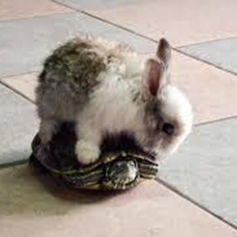 Rabbit and turtle