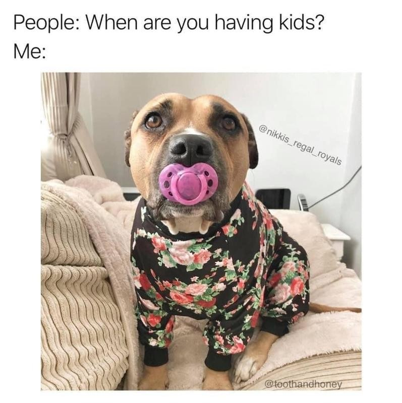 Dog dressed like a baby with pacifer