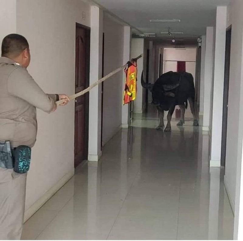Bull in a hallway