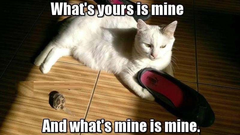 Cat playing with women's shoe