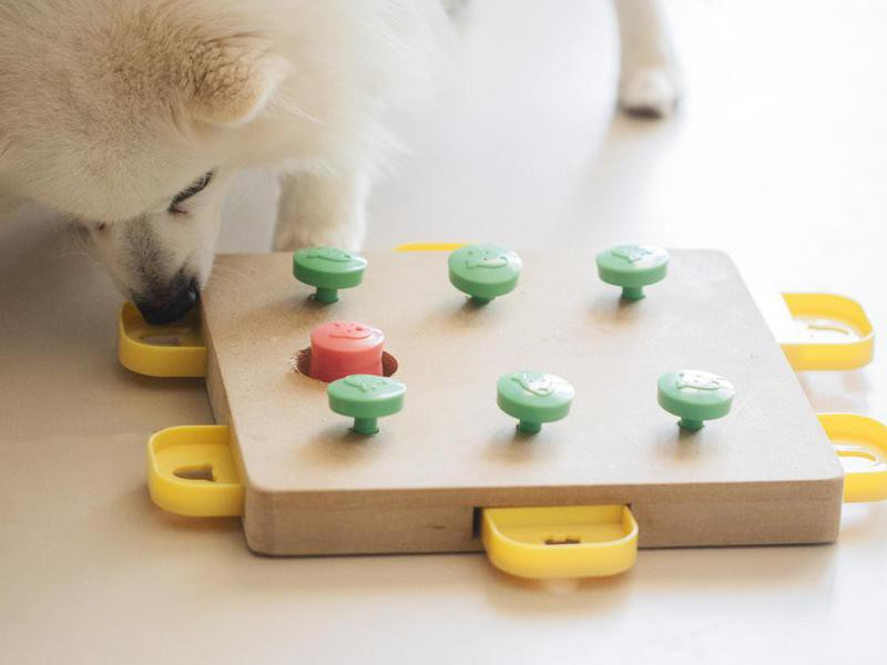 Provide Puzzle Food Toys