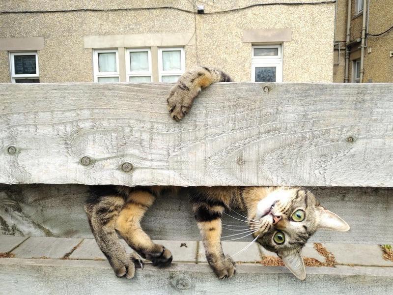 cat on fencce
