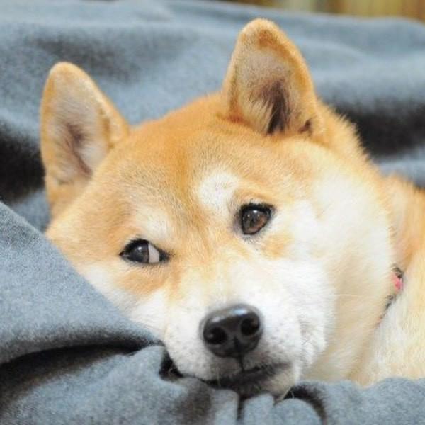 Dog looking skeptical