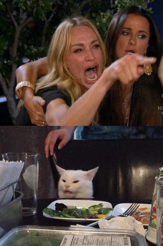 Cat entertainment