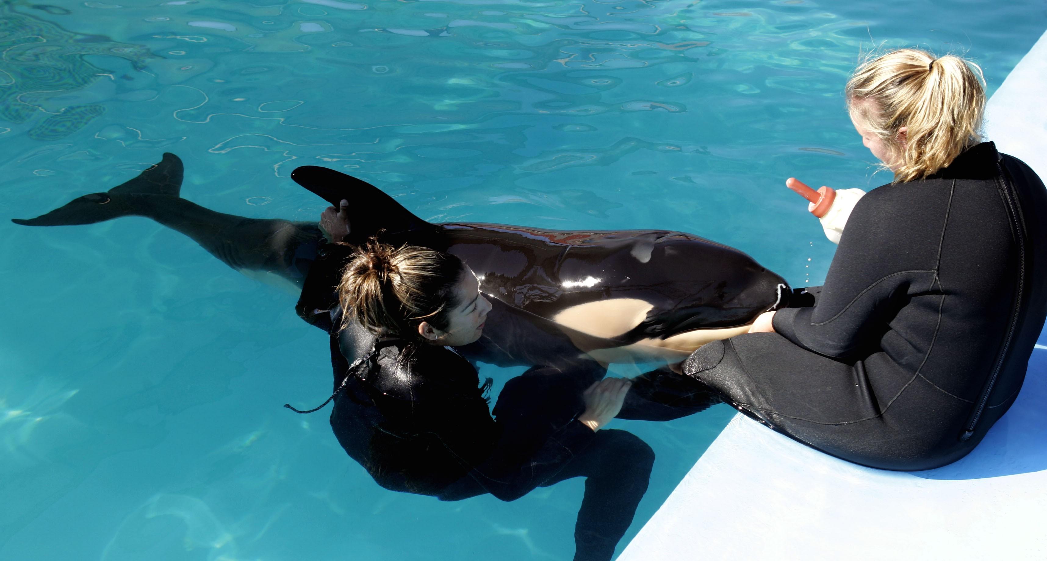 Baby killer whale