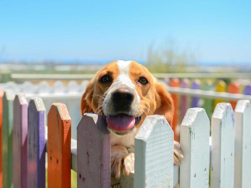 Dogs Are Colorblind — Debunked