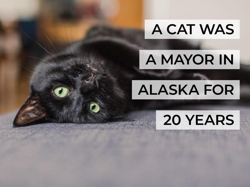 A Cat Was a Mayor in Alaska for 20 Years