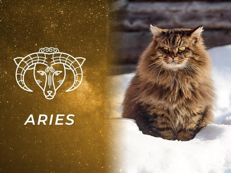 Aries: Siberian