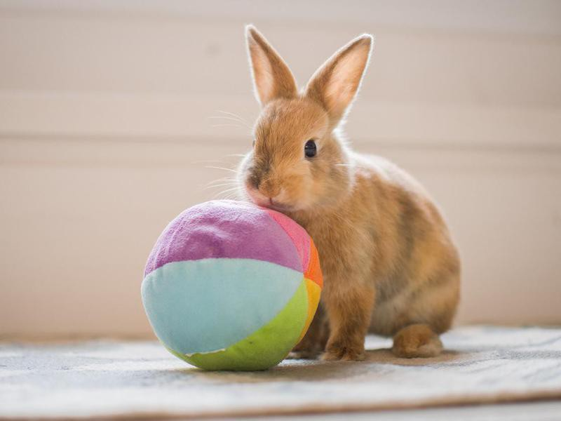 Push a Ball