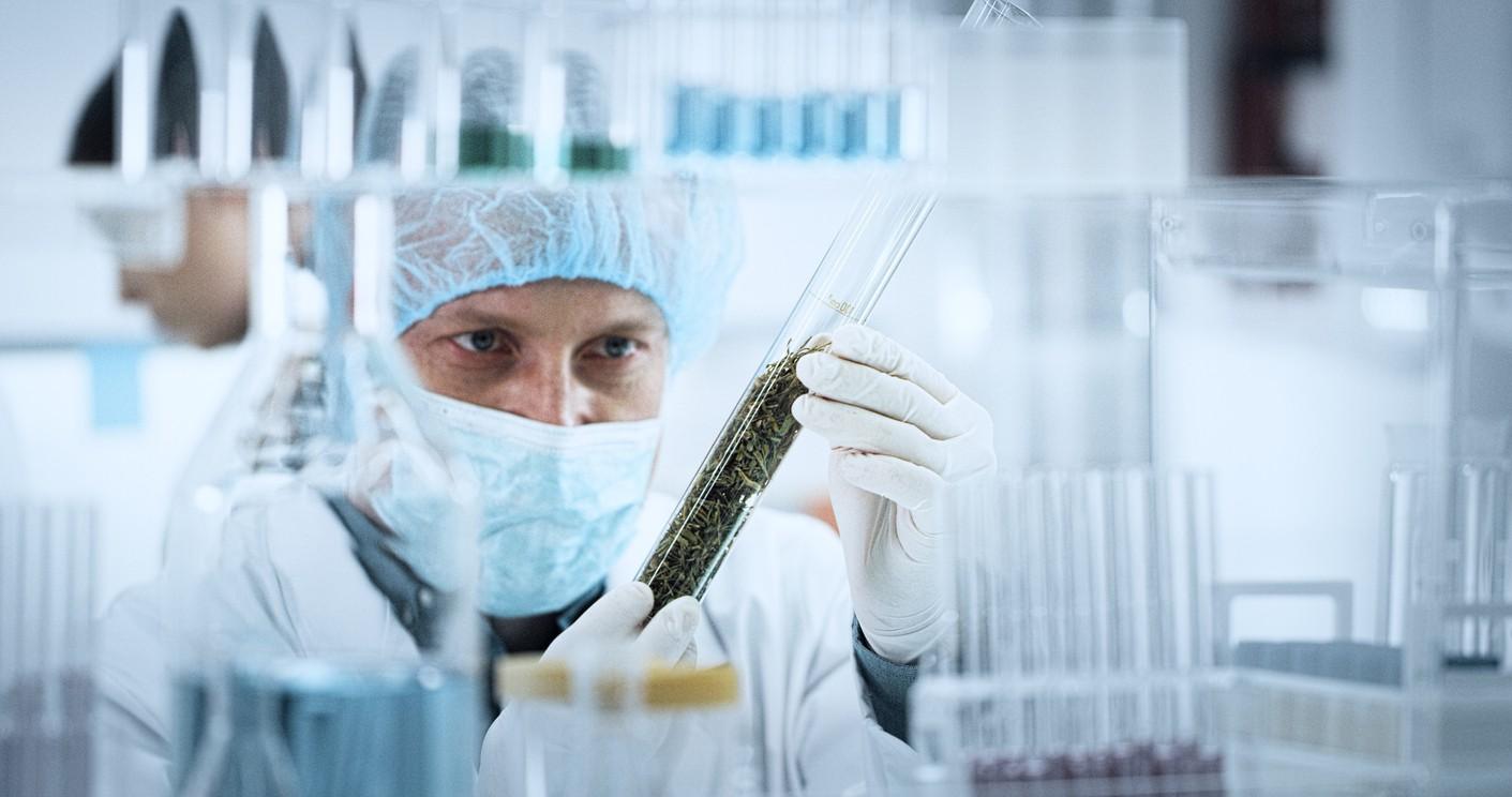 Cannabis extraction technician