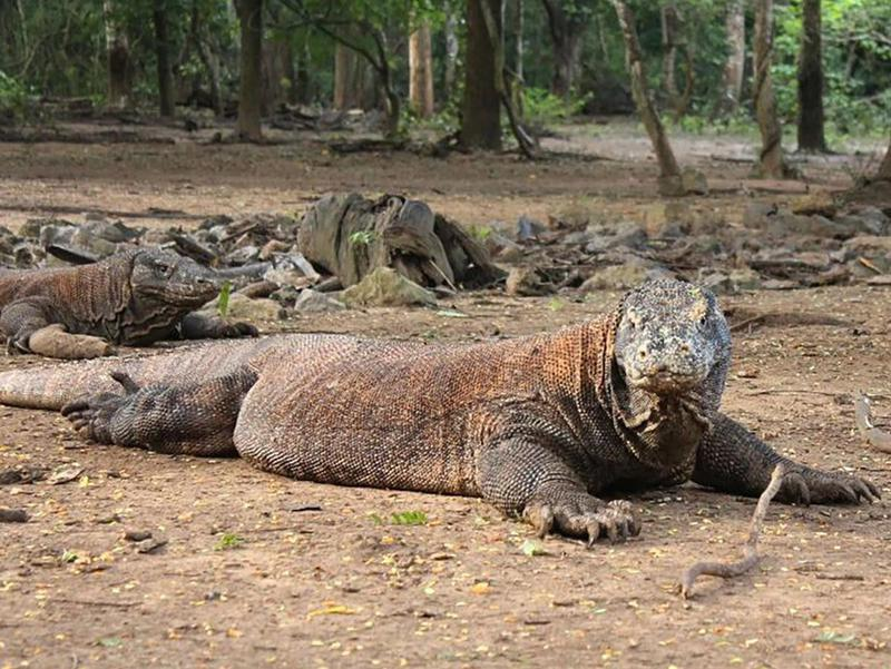 Indonesia's Komodo National Park