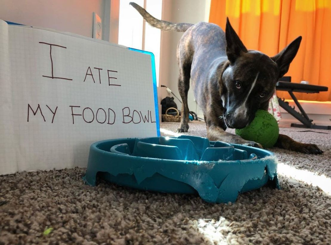 Dog and his blue food bowl